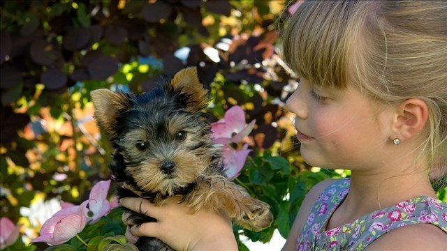 Bacterial Infections In Kansas, 6 Other States Linked To Pet Store Puppies
