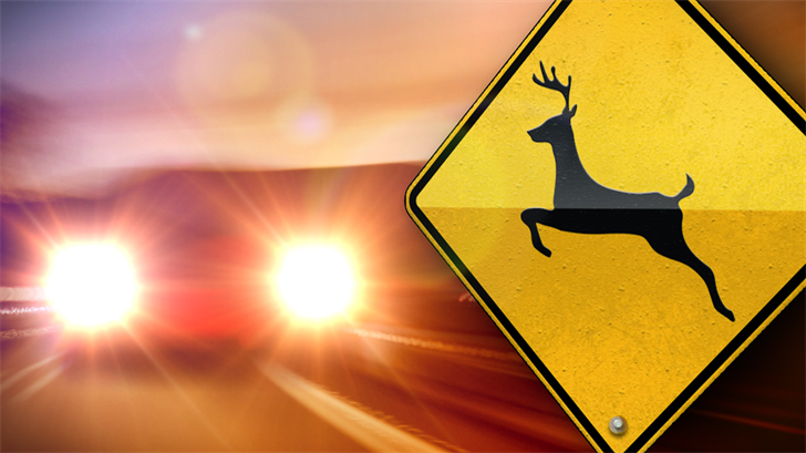 Deer hit by vehicle hurled into oncoming auto, killing Kansas teen
