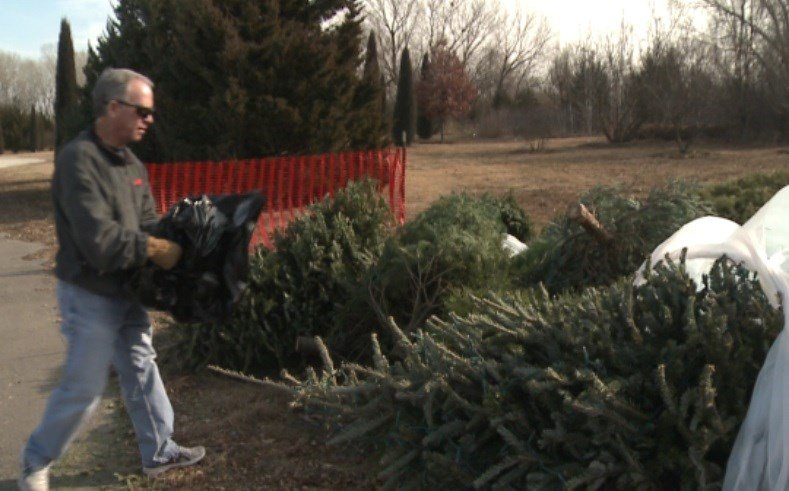GI Utilities recycling Christmas trees at 2 locations