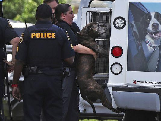 (Photo: Carline Jean, South Florida Sun-Sentinel via AP)