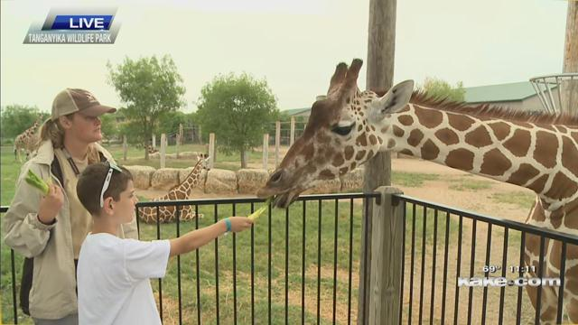 Going wild at Tanganyika - KTEN com - Texoma news, weather and sports