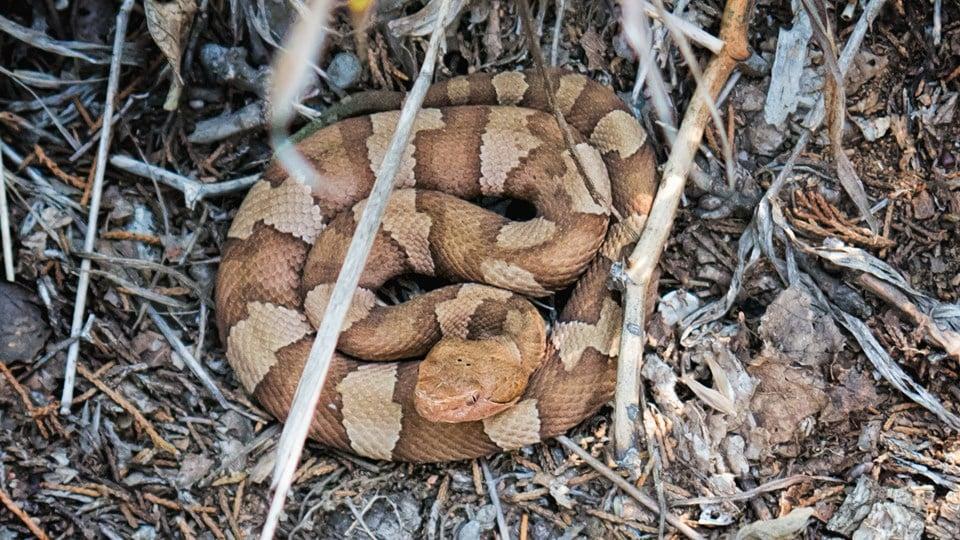 Lake texoma snakes