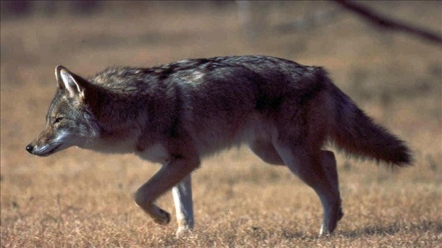ON YOUR SIDE GETS ANSWERS: Coyote sightings and health screening company