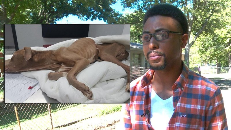 Vincent Currie turns out the be the owner of a severely emaciated dog he claims he found dumped in an alley.