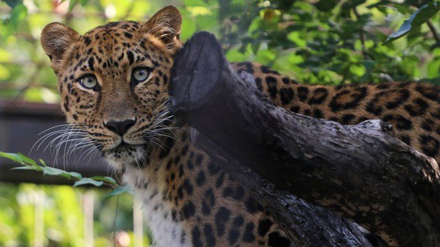 Photo: Amy Hawley, Sedgwick County Zoo Volunteer Coordinator