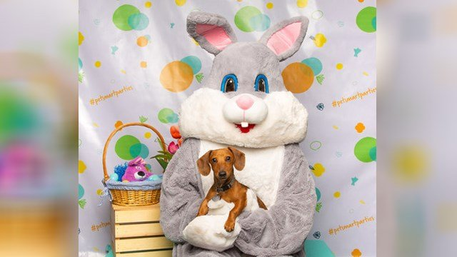 PetSmart offering free pictures with the Easter Bunny this weekend