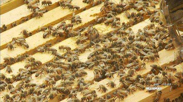 Local Wichita beekeeper fighting to protect bees