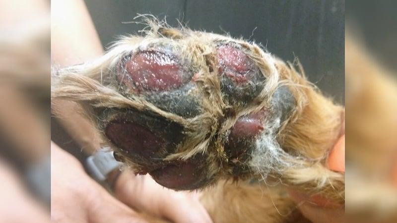 Facebook/Medical Lake Veterinary Hospital