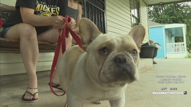 French bulldog runs away, found after journey in between