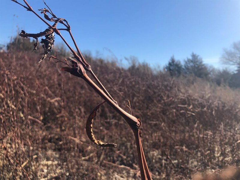 Wet weather this spring, mild temperatures over the summer and drying winds this fall have combined to create a lot of dried out scrub brush that can go up in flames in seconds.
