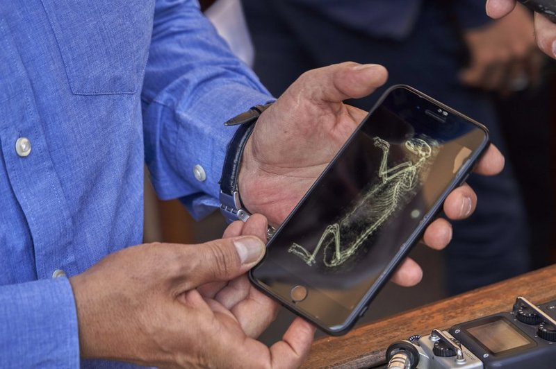 Mostafa Waziri, secretary general of the Supreme Council of Antiquities, shows an image of CT-scan of a lion cub in Saqqara, south Giza, Egypt, Saturday, Nov. 23, 2019. Egypt's Ministry of Antiquities revealed details on recently discovered animal mummies