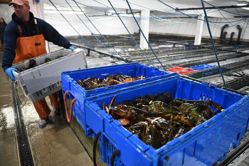 A worker of Maine Coast company carry lobsters before packing in Portland, Maine. In 2016, China bought 40.9 million dollars' worth of lobsters from Maine, where most of America's lobsters are caught.