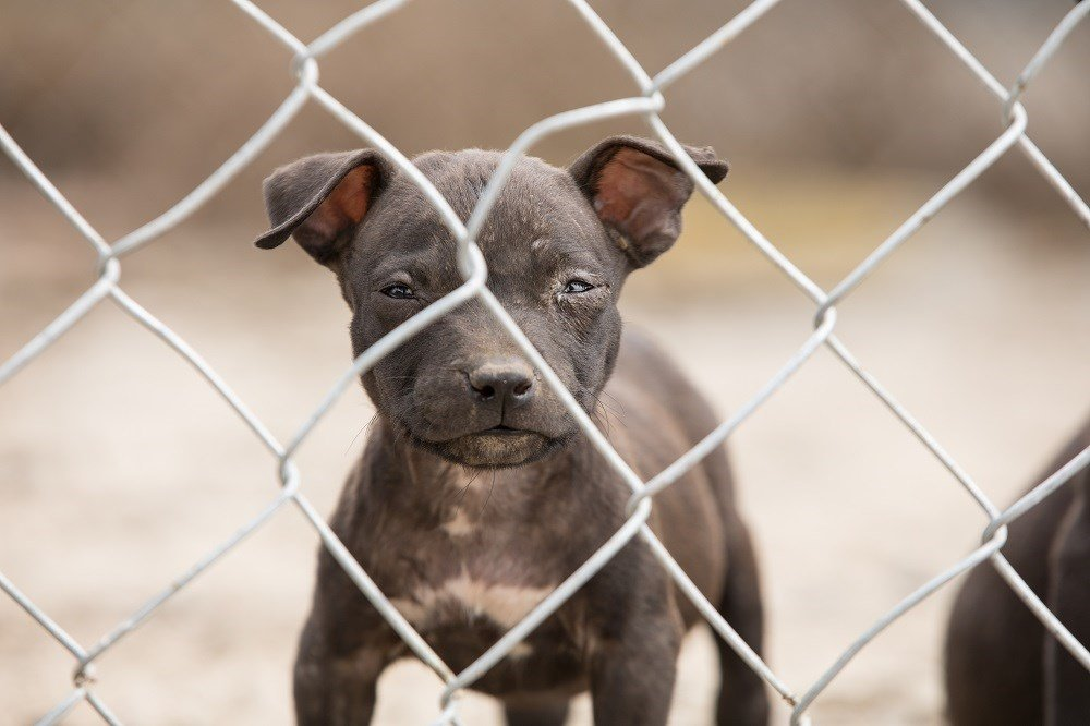 45 dogs seized, man arrested in Kansas dogfighting bust