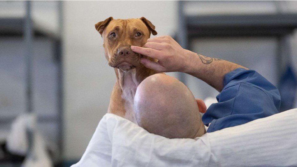Prison animal programs are benefitting both inmates and hard-to