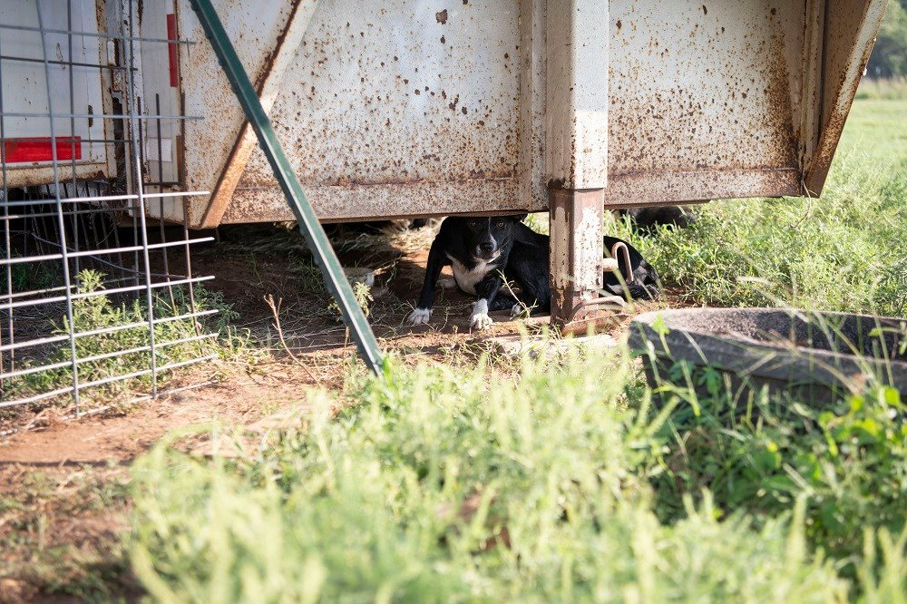 Dozens of dogs rescued from alleged 'cruelty situation' in Kingm